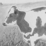 Vache - Île de Prince Edward  Canada, 1990 (collection privée)