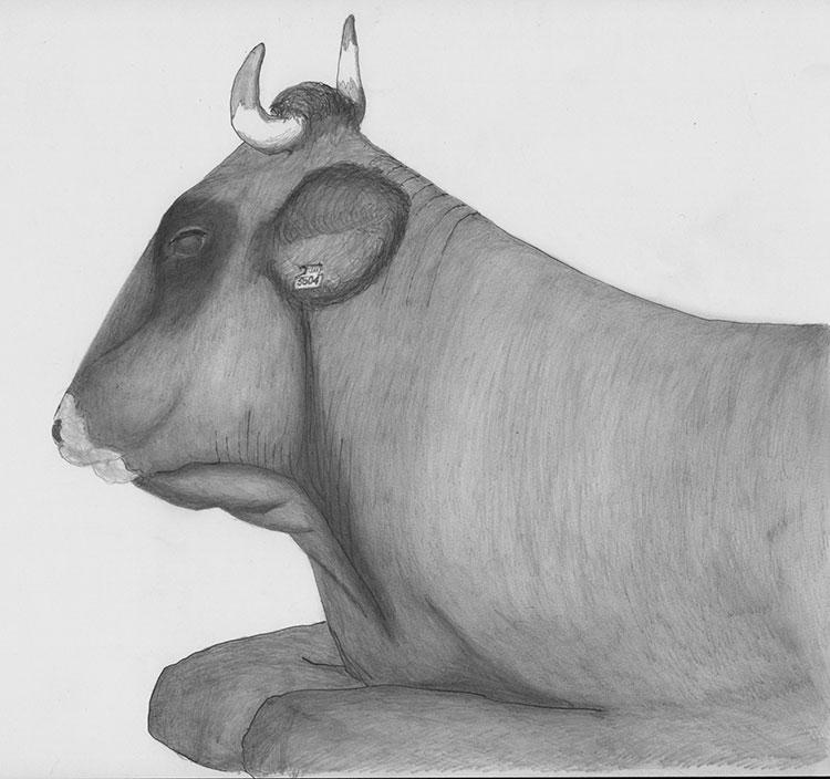 Vaca Basco Suzana