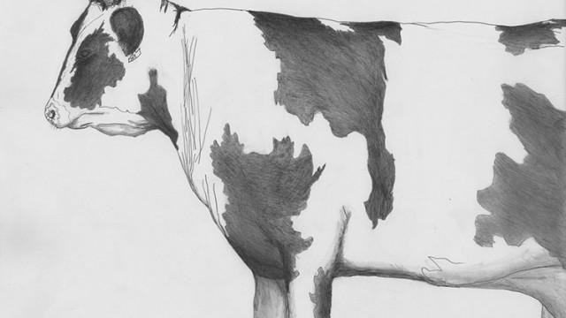 Vache - Getaria Espagne, 2005