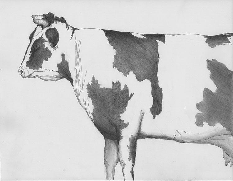 Vaca Basque Bis