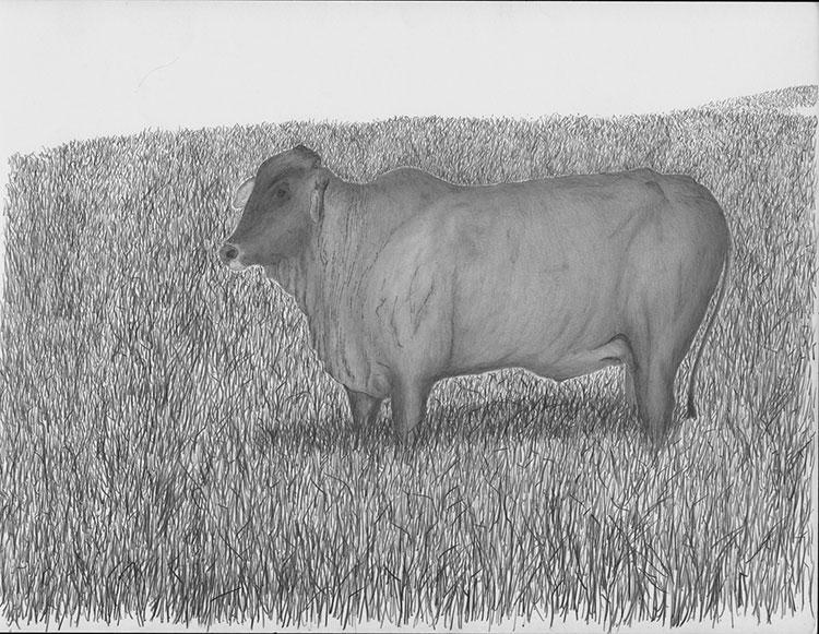 Vaca Bis