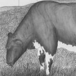 Vache- La Ceja Colombie  2006