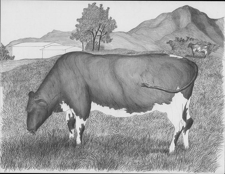 Vaca La Ceja Bis